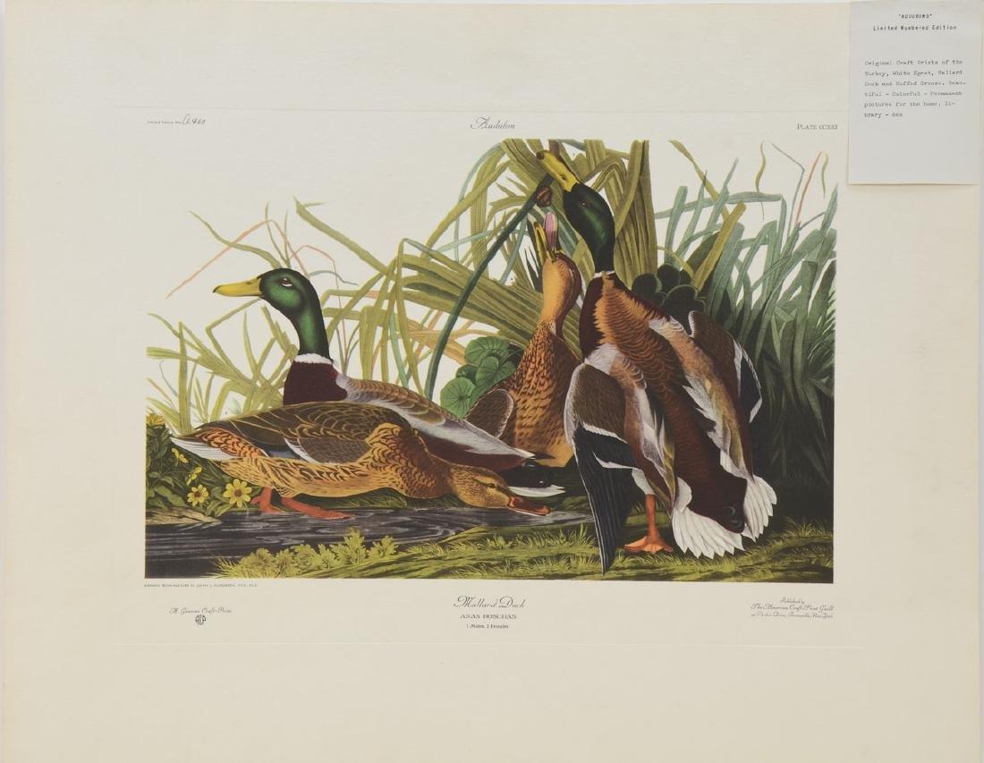 Audubon Mallard Duck ACP Edition