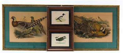 Four Hand Colored Bird Lithographs