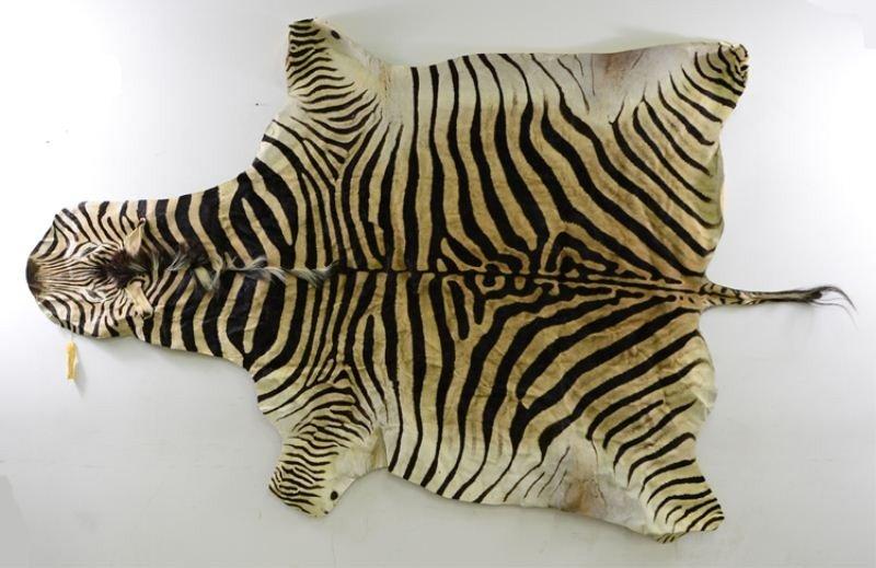 15: Zebra Skin Rug / Wall Hanging