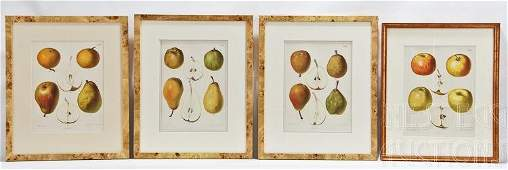 Four Framed Fruit Lithographs The Dutch Orchard