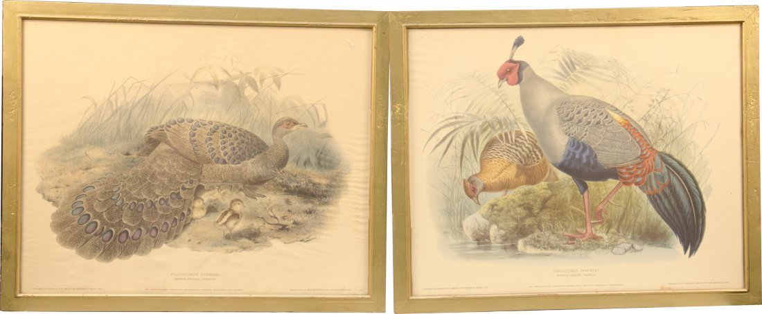 868: Lot of 2 Bird Prints in Frames: