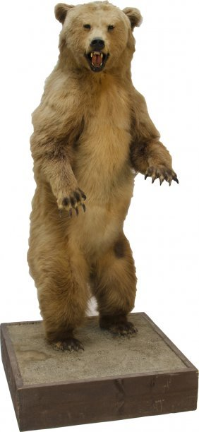 Stuffed Brown Bear Standing On Hind Legs