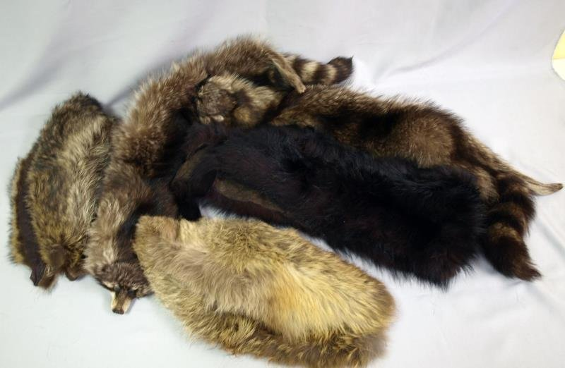 Collection of  fur stoles and collars