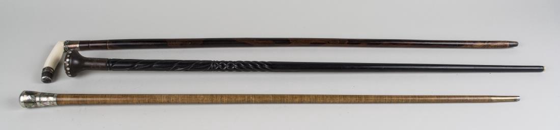 Three Walking Sticks - 2
