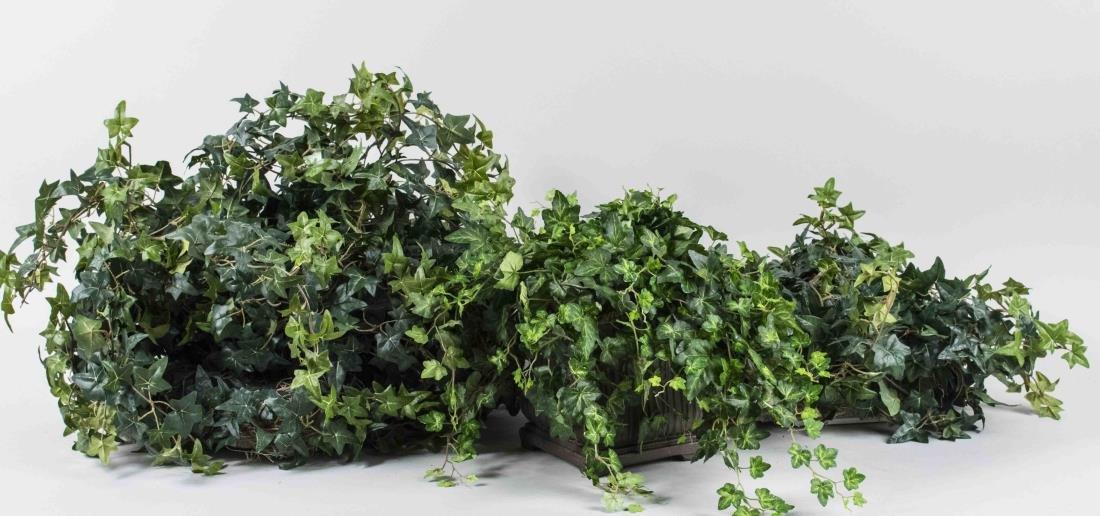 Three Ivy Flower Arrangements