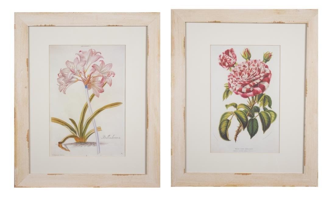 Pair Decorative Floral Botanical Prints (20th C)
