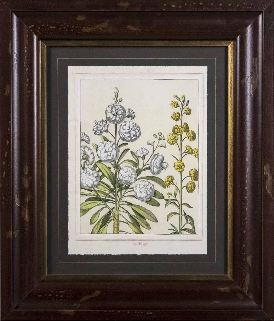 Set of Four Botanical Prints - 2