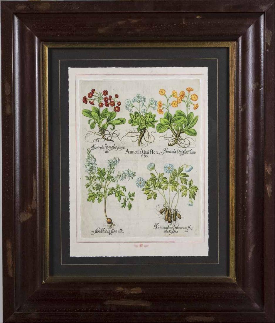 Set of Four Botanical Prints - 3