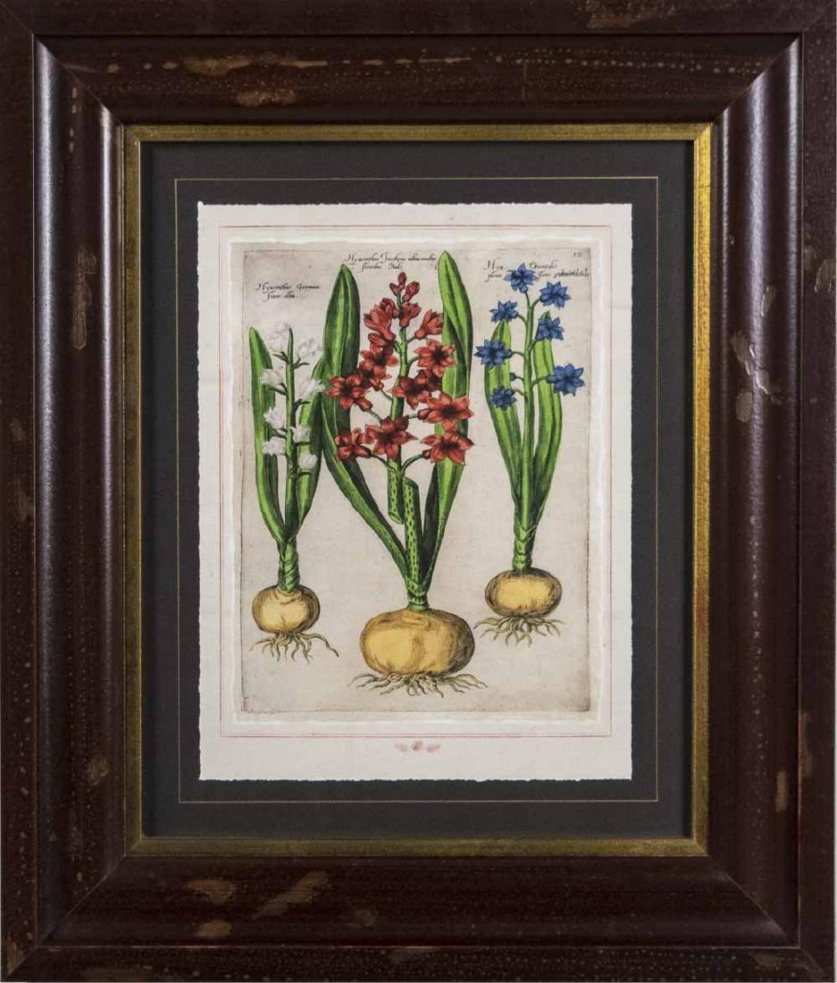 Set of Four Botanical Prints - 4