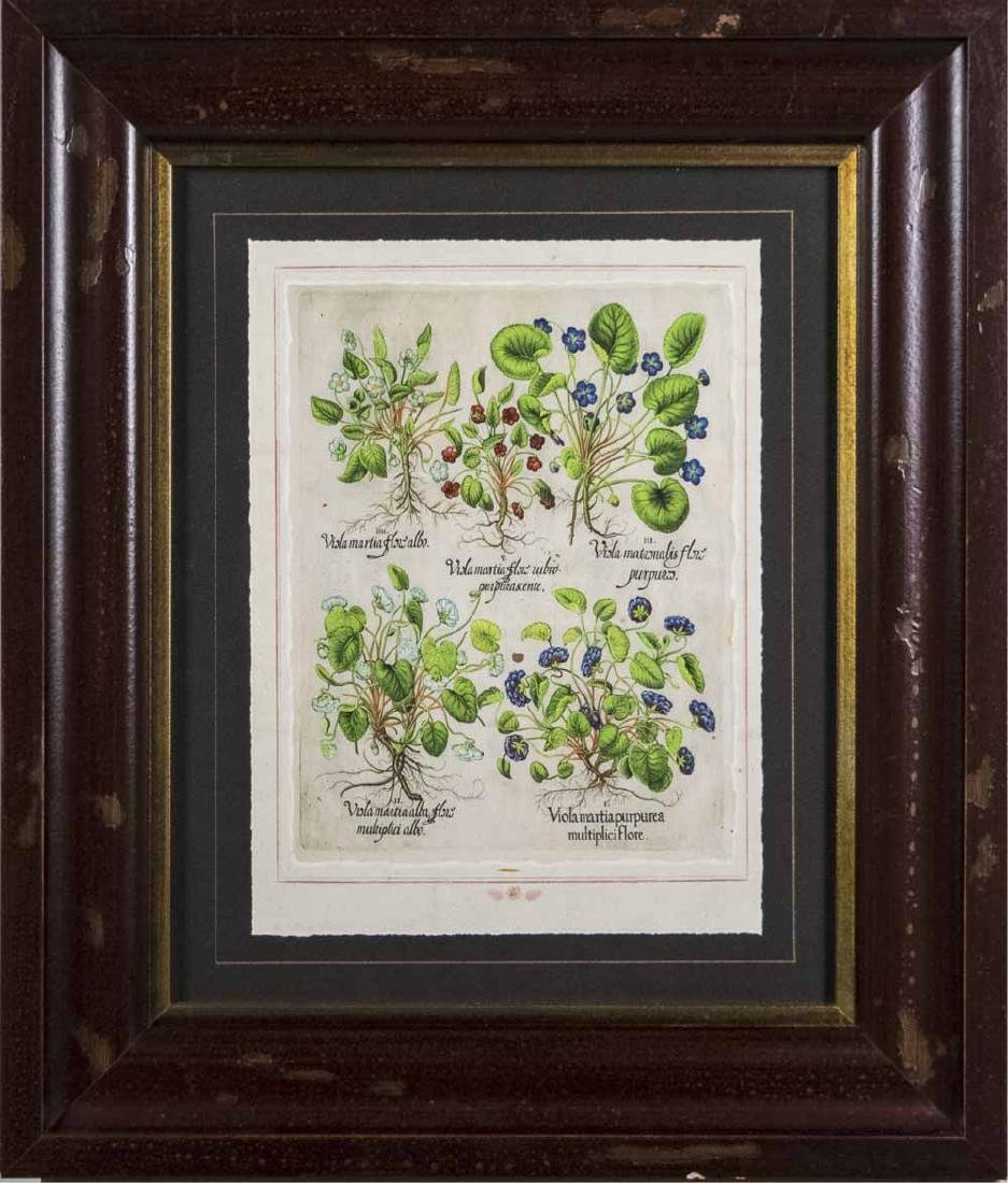 Set of Four Botanical Prints - 5