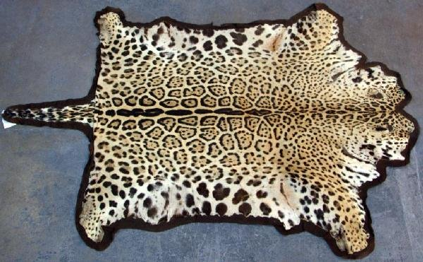 550: Leopard Skin Rug