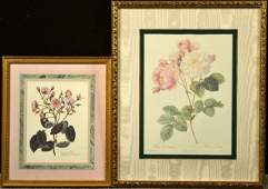 33 After PJ Redoute Two Rose Prints