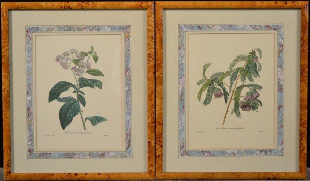 9: P.J. Redoute Pair of Prints