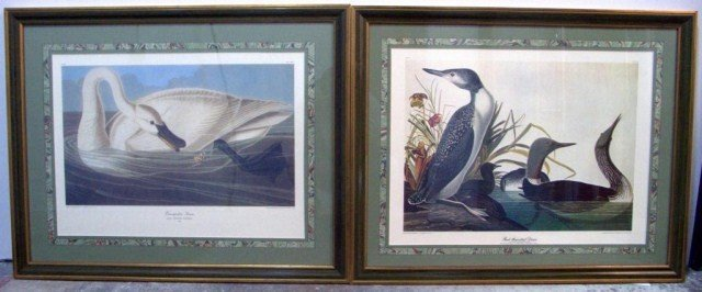 10: Pair of John J. Audubon Prints