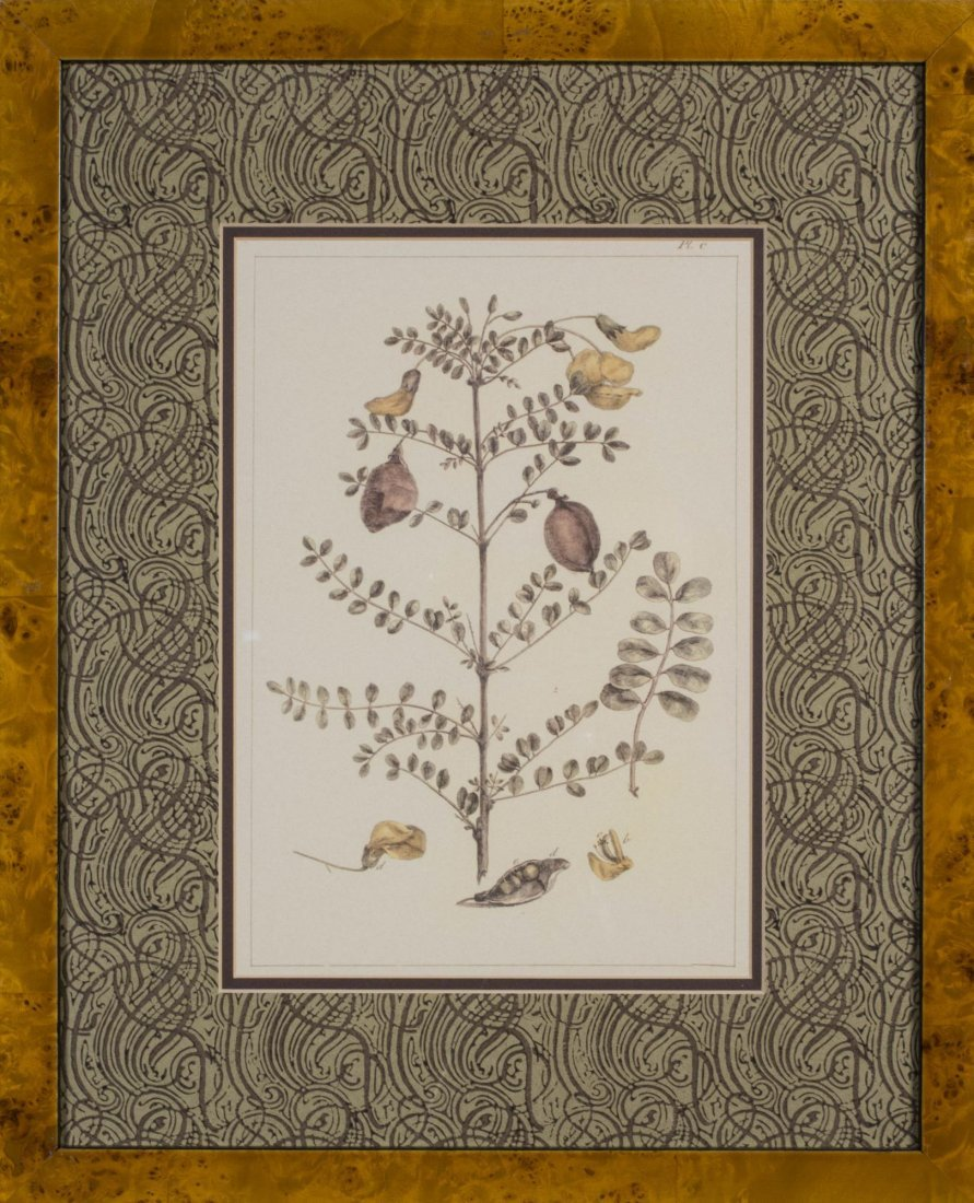 Group of Six Decorative Floral Prints - 5