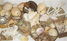 4598 Large collection of sea shells