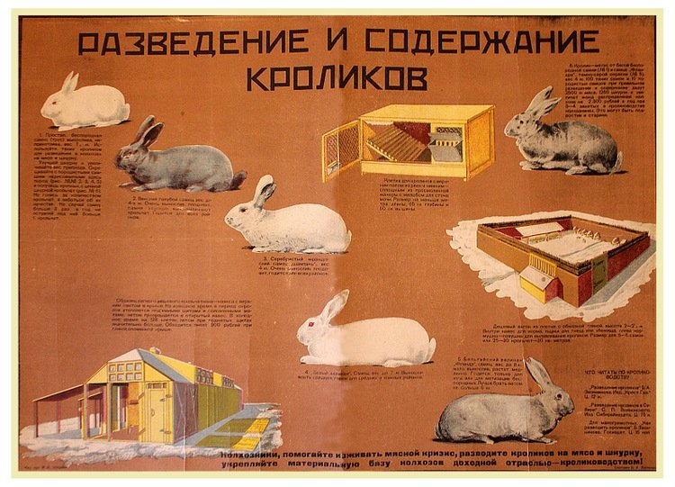 EBERMAN, M. Rabbit Breeding and Upkeep, 1931