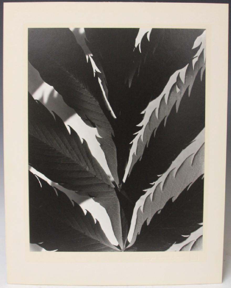 IMOGEN CUNNINGHAM (1883-1976), ESTATE PHOTO