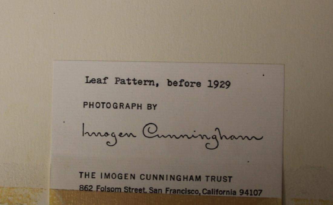 IMOGEN CUNNINGHAM (1883-1976), ESTATE PHOTO - 3