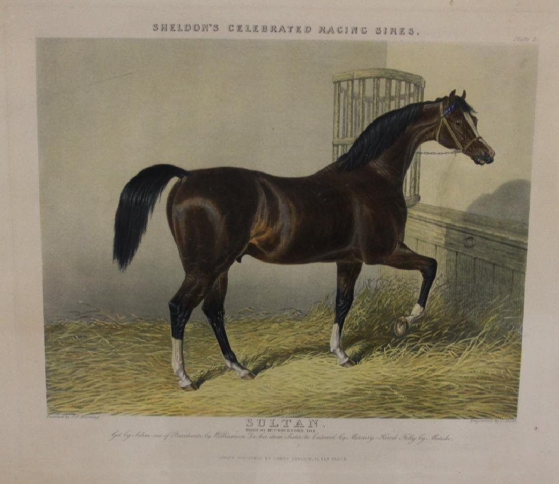 SET OF (4) HORSE PRINTS - 2