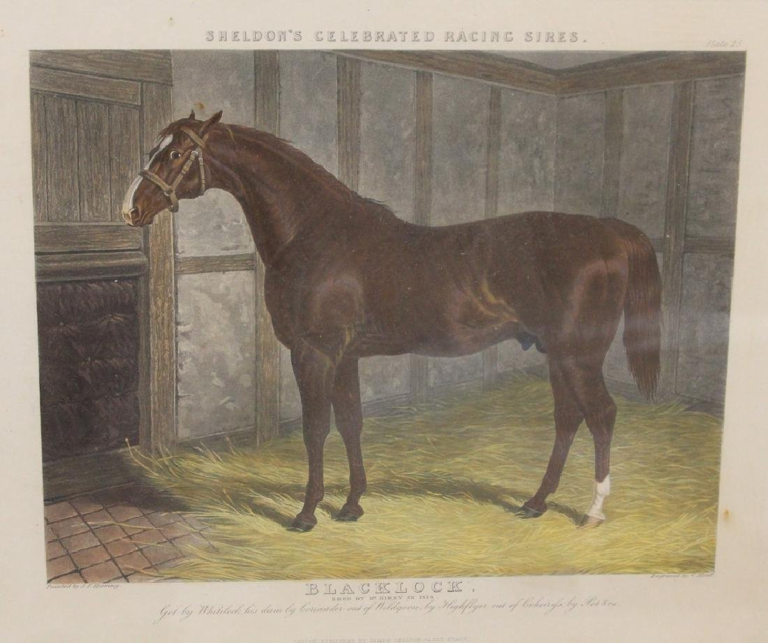 SET OF (4) HORSE PRINTS - 3