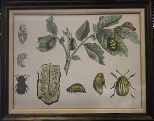 19TH C COLORED LITHOGRAPH OF INSECTS LARGE FORMAT