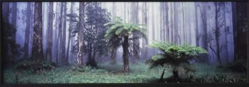 "Peter Lik, Photograph ""Misty Forest"""