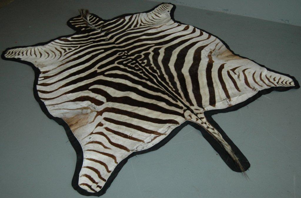54: Zebra Skin Rug