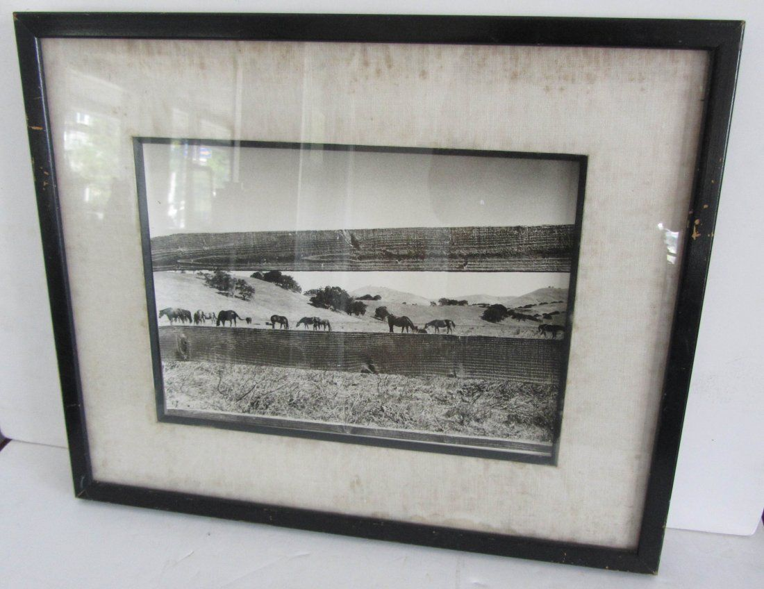 Vintage Black and white photograph of horses