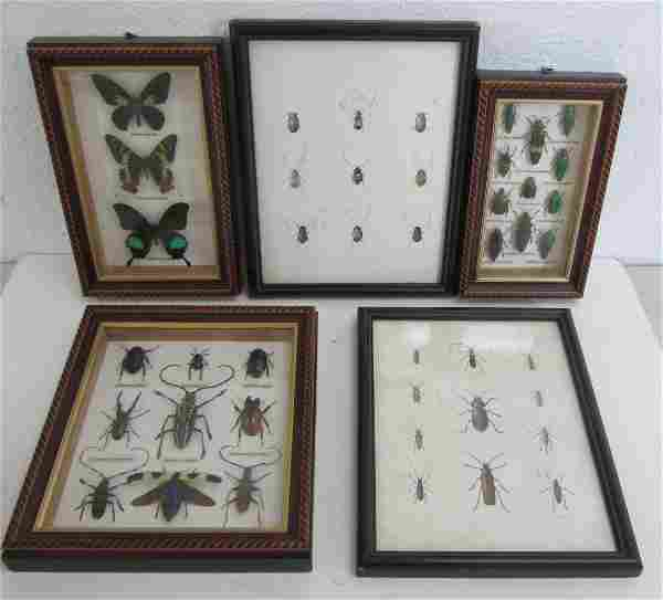 Lot of framed insect collection and drawings