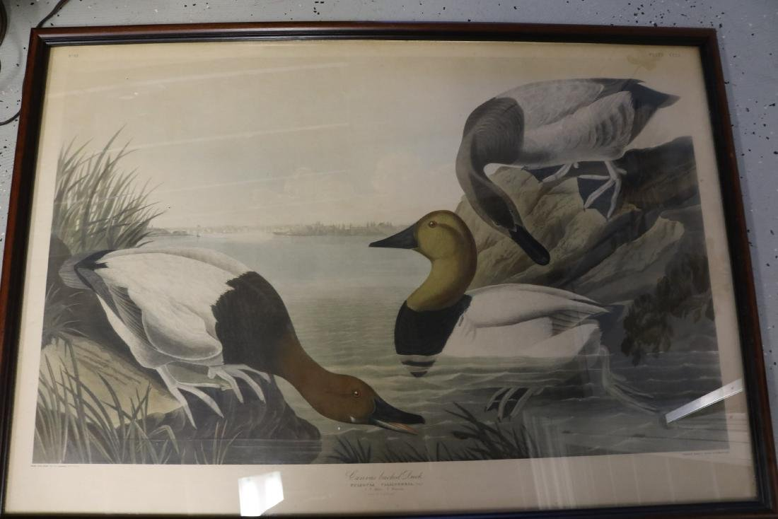 "J.J. Audubon Engraving, ""Canvas Back Duck"" No. 61,"