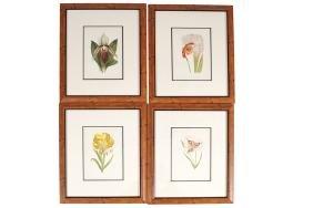 SET OF FOUR BOTANICAL CHROMO-LITHOGRAPHS, CIRCA 1900