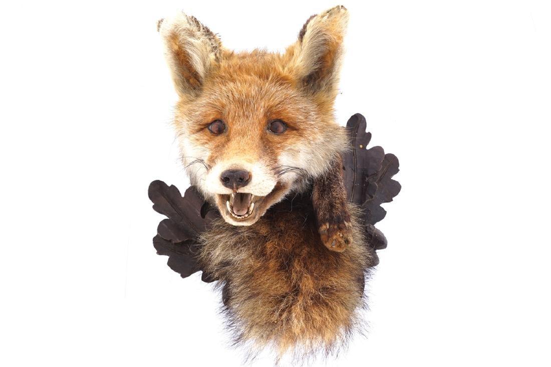 TAXIDERMY: MOUNTED FOX'S HEAD