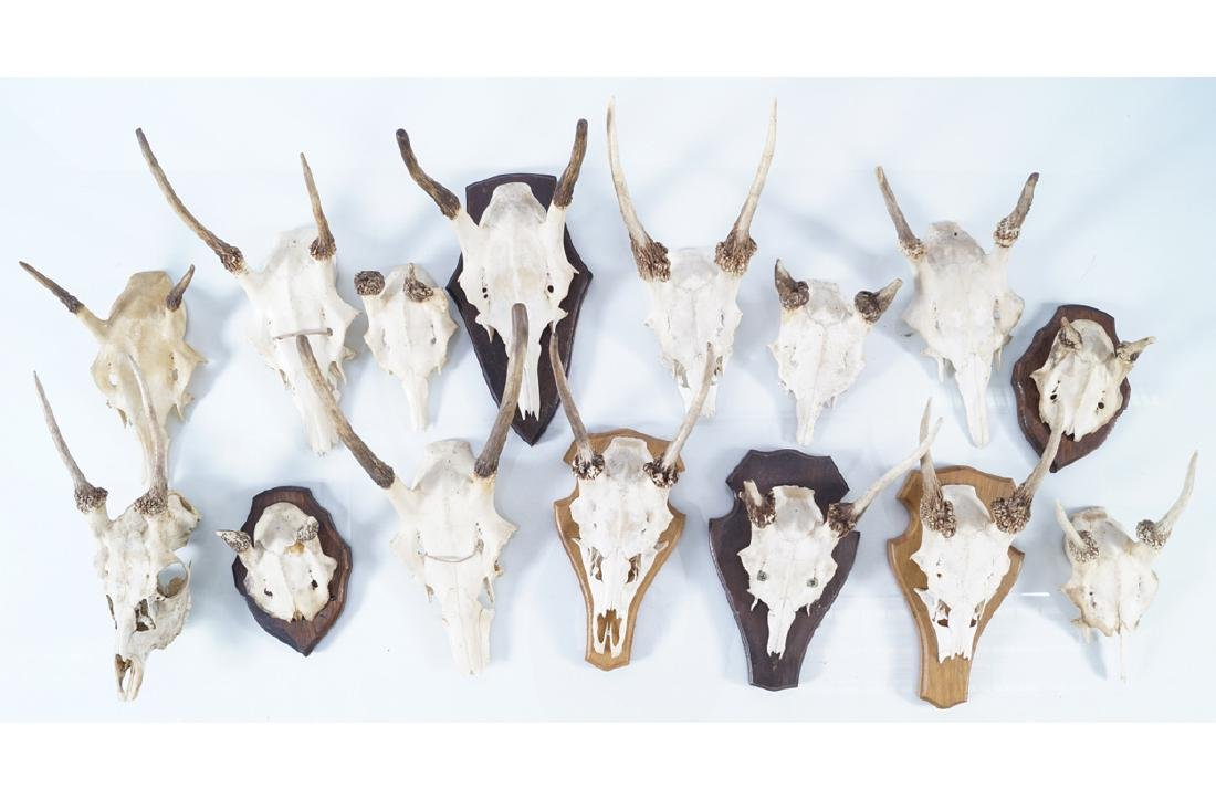 TAXIDERMY: GROUP OF FIFTEEN MOUNTED TROPHY SKULLS