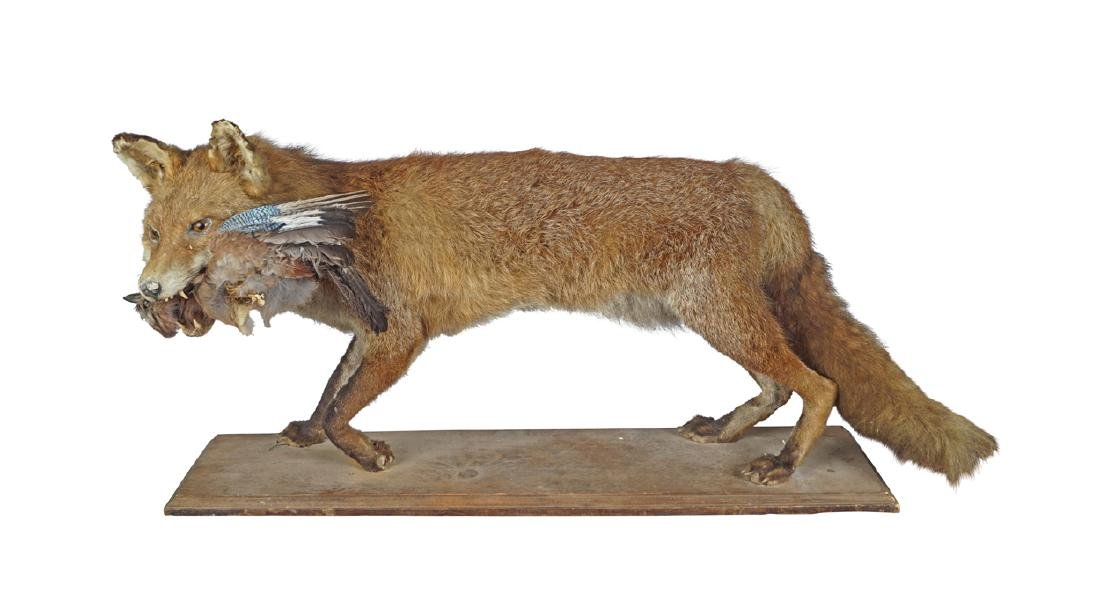 TAXIDERMY: FOX MOUNTED ON A WOODEN BASE