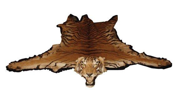 642: Tiger Skin Rug