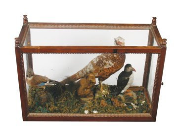 Stuffed birds and a squirel in case