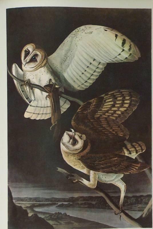 "8: AUDUBON ""BARN OWL"" - 1937  - By John J Audubon"