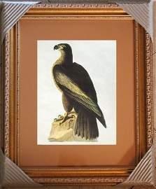 """AUDUBON """"BALD EAGLE"""" - 1937 LITHOGRAPH"""