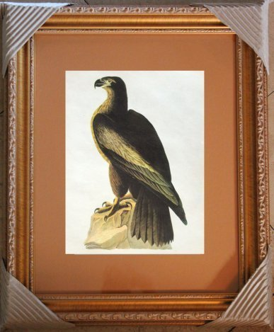 "AUDUBON ""BALD EAGLE"" - 1937 LITHOGRAPH"