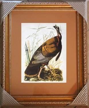 "AUDUBON ""WILD TURKEY"" - 1937 LITHOGRAPH"