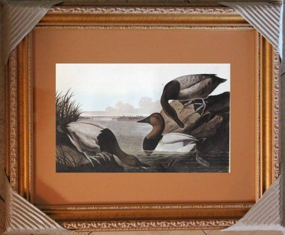 "AUDUBON ""CANVAS BACK"" - 1937 LITHOGRAPH"