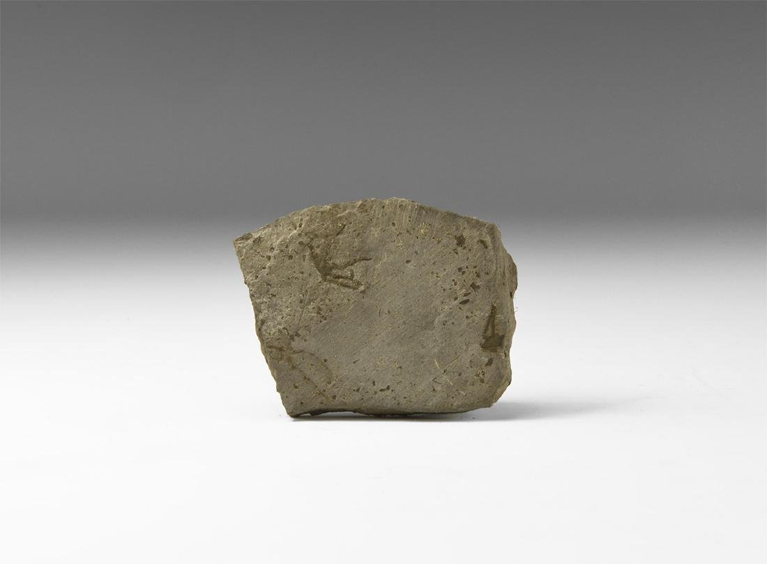 Natural History - Historic Fossil 'Starfish'