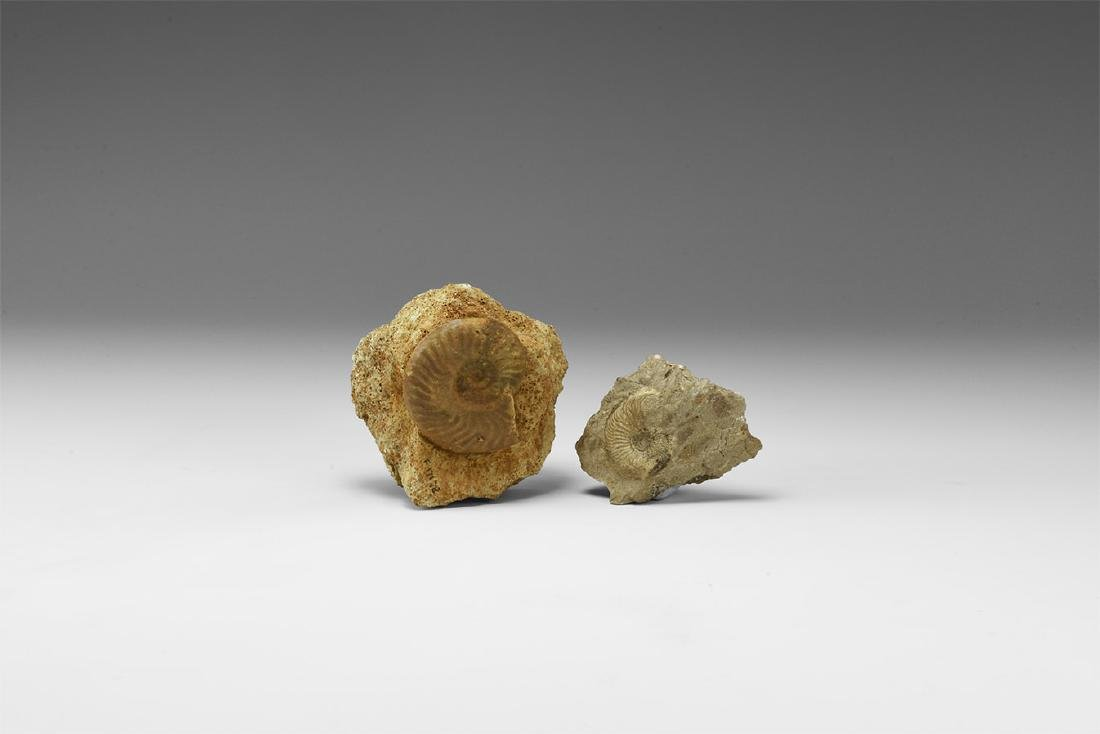 Natural History - Historic Ammonite Fossil Group