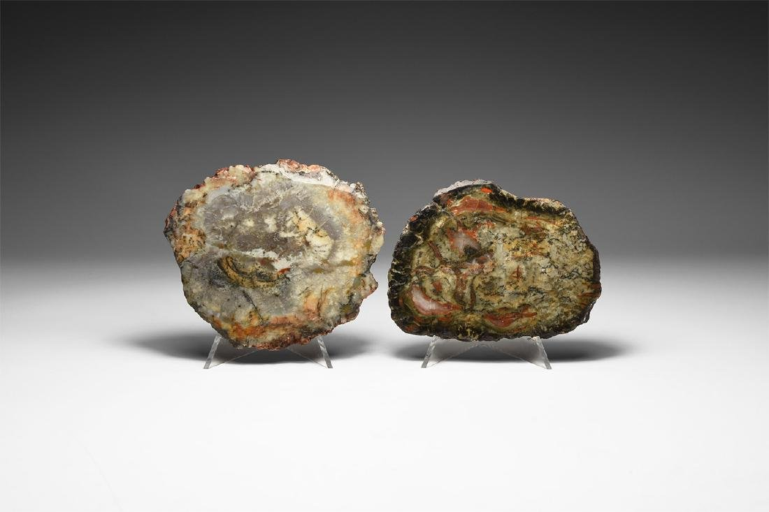 Polished Dinosaur Coprolite Group