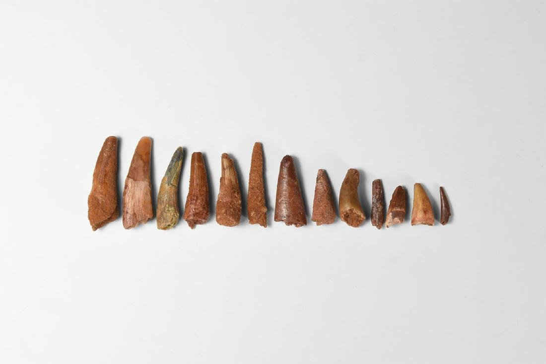 Pterosaur Tooth Group