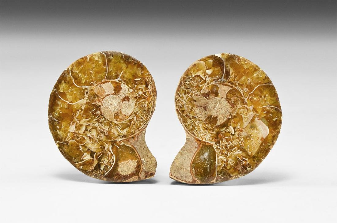 Cut and Polished Fossil Ammonite