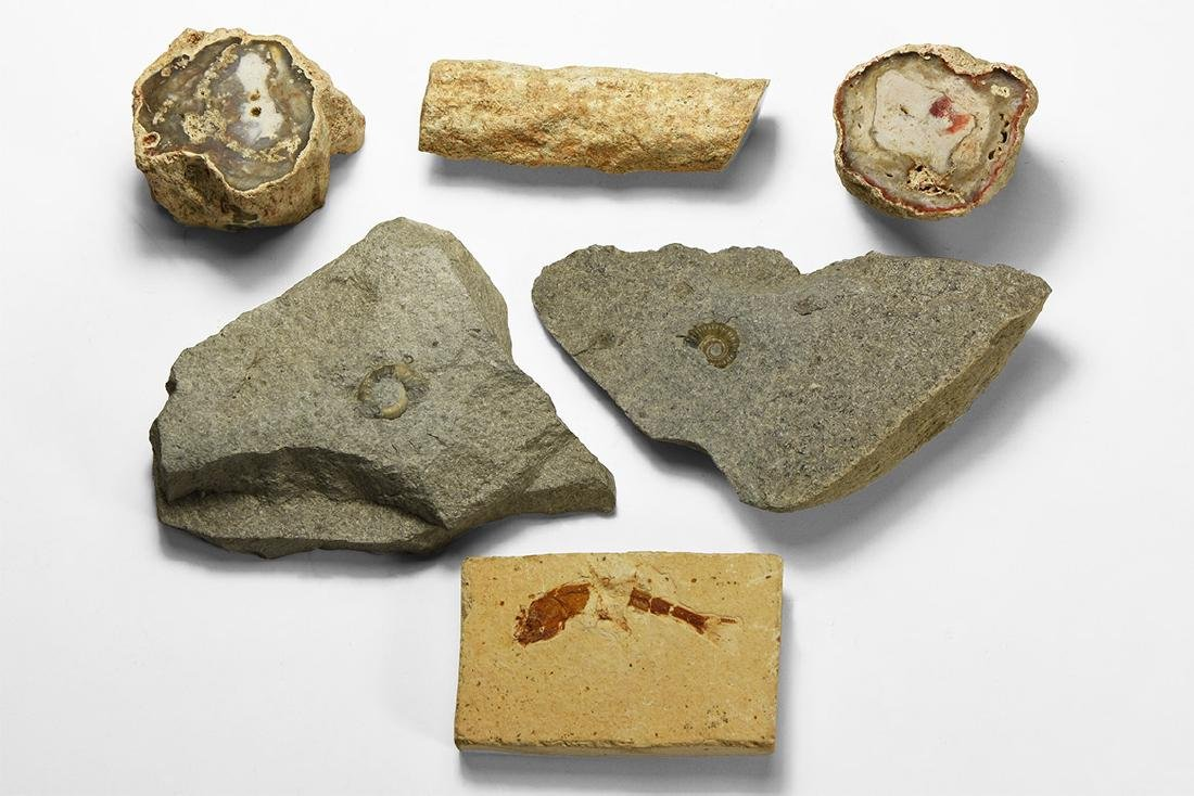 Mixed Fossil Group