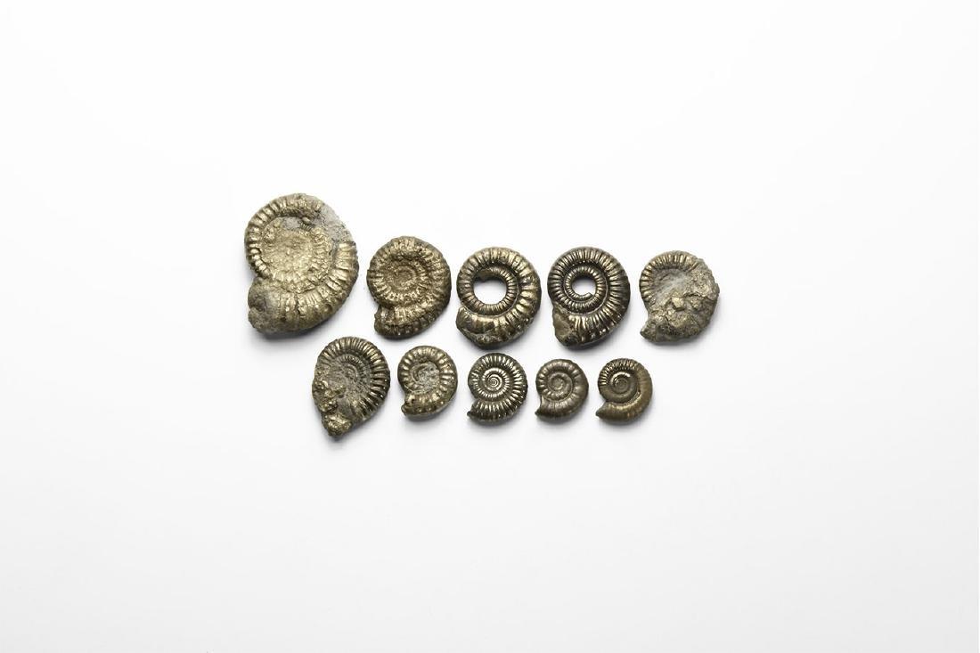 Pyrite Ammonite Group