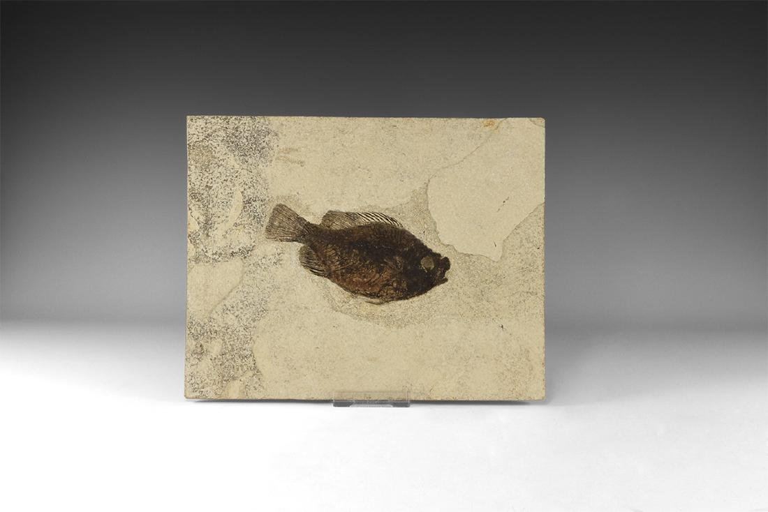 Fossil Priscacaraliops Fish